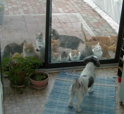 libby_looking_at_cats_small_20021208: